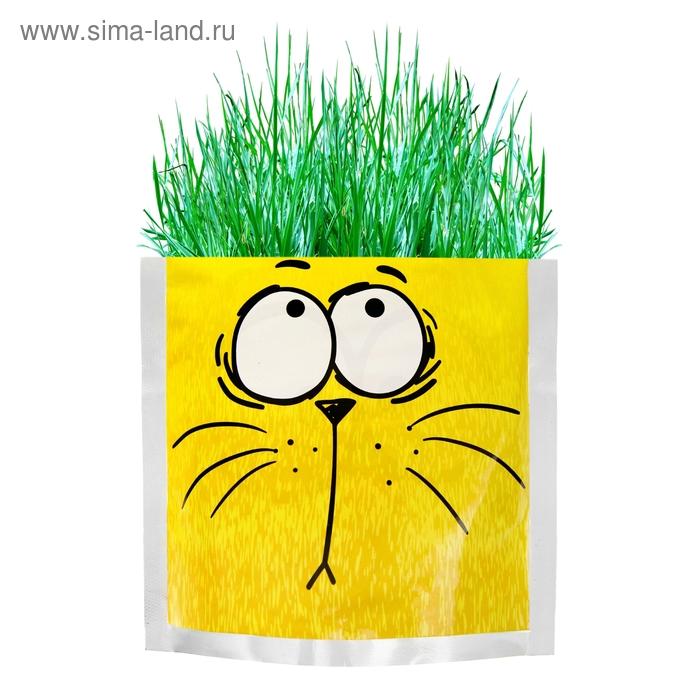 "Растущая трава ""Котэ"", трава"