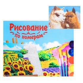 Картина по номерам на холсте, 40 × 50 см «Милые ламы»