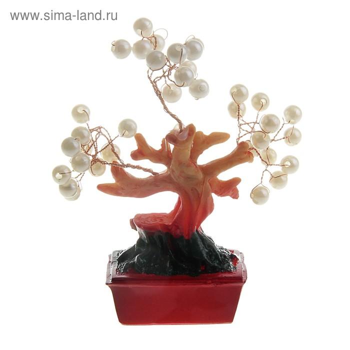 """Денежное дерево """"Жемчуг"""""""