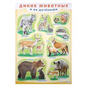 """Плакат """"Дикие животные и их детёныши"""" А2"""