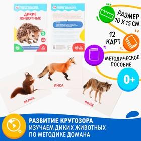 Обучающие карточки по методике Глена Домана «Дикие животные», 12 карт, А5