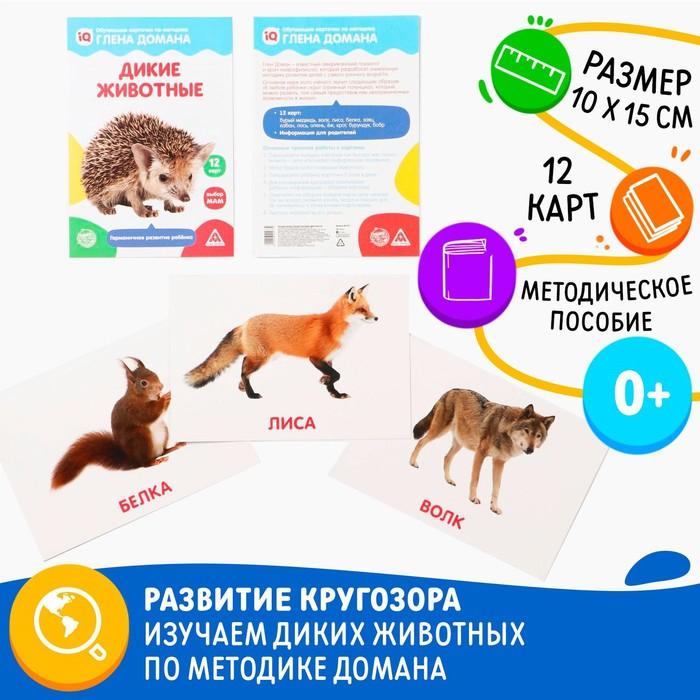 Обучающие карточки по методике Глена Домана «Дикие животные», 12 карт, А5 - фото 105496757