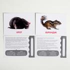 Обучающие карточки по методике Глена Домана «Дикие животные», 12 карт, А5 - фото 105496761