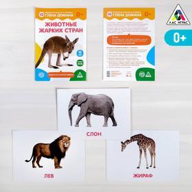 Обучающие карточки по методике Глена Домана «Животные жарких стран», 12 карт, А5