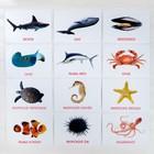 Обучающие карточки по методике Глена Домана «Морские обитатели», 12 карт, А5 - фото 1006447