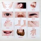 Обучающие карточки по методике Глена Домана «Части тела», 12 карт, А5 - фото 105496850