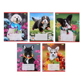 Тетрадь 12 листов в линейку «Верный друг», обложка мелованный картон, МИКС
