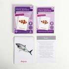 Обучающие карточки по методике Глена Домана «Морские обитатели», 12 карт, А6, в коробке - фото 105496942