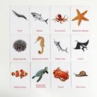 Обучающие карточки по методике Глена Домана «Морские обитатели», 12 карт, А6, в коробке - фото 105496943