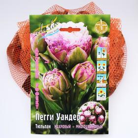 "Тюльпан ""Пегги Уандер"" 45см, р/р 11/+, сетка 50 шт"