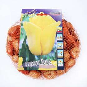 "Тюльпан ""Стронг Голд"" 55см, р/р 11/12, сетка 50 шт"