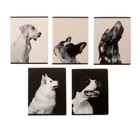 Тетрадь 60 листов в клетку «Черное и белое», обложка мелованный картон, выборочный УФ-лак, блок офсет, МИКС