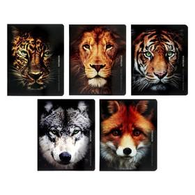 Тетрадь 80 листов в линейку «Морды животных», обложка мелованный картон, УФ-лак, блок офсет, МИКС