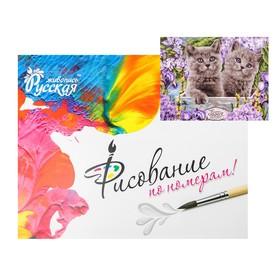 Картина по номерам «Британские котята» 40 × 50 см