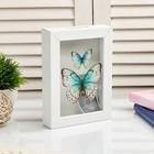 """Piggy Bank interior plastic """"Butterfly"""" 17х12х3,8 cm"""