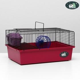 """Клетка для грызунов """"Пижон"""" №4, с этажом, укомплектованная, 37 х 26 х 18 см, малиновая"""