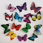 "Magnet ""Colorful butterfly"", MIXED"
