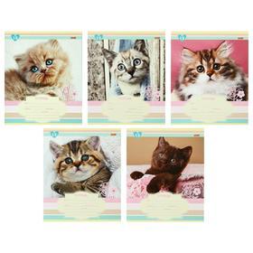 Тетрадь 12 листов в линейку «Милый котенок», обложка мелованная бумага, блок №2, белизна 75%, МИКС
