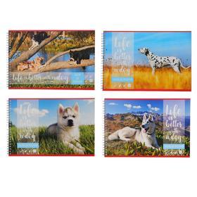 Альбом для рисования А4, 48 листов на гребне «Собака-лучший друг!», обложка мелованный картон, блок 100 г/м2, МИКС