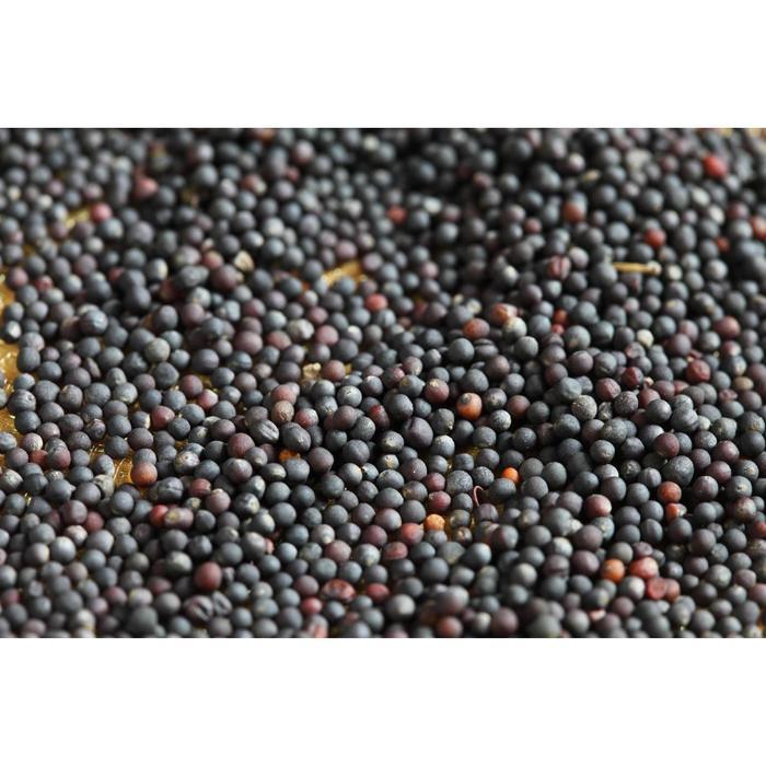 Семена Рапс 25 кг