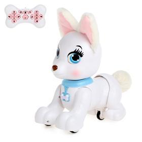 Робот-собака радиоуправляемый «Милый корги», световые и звуковые эффекты
