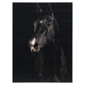 Картина 'Черный конь' 30*40 см Ош