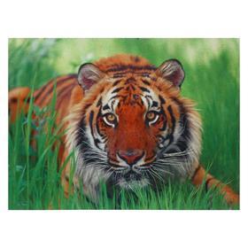 Картина 'Тигр' 30*40 см Ош