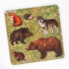 Рамка-вкладыш «Дикие животные. Медведь»