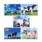 "Pocket calendar ""symbol of the year - 10"" 2021, 7 x 10 cm, MIX"