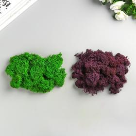 """Мох стабилизированный 2 в 1 """"Зелёный и фиолетовый """" 100 гр."""