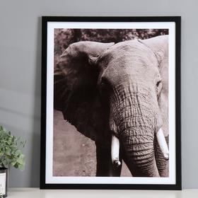 """Poster plastic """"Elephant"""" 40x50 cm"""