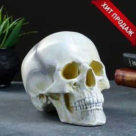 """Копилка """"Череп"""" кость белая, 16х13х22см"""