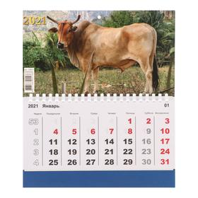 "Mono calendar ""Symbol of the year-1"" 2021, 20 × 24 cm"