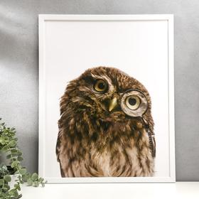 "Poster plastic ""portrait of an owl"" 40x50 cm"