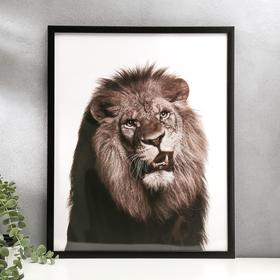 "Poster plastic ""brutal lion"" 40x50 cm"
