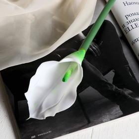 "Artificial flower ""Calla"" 7x65 cm, white"