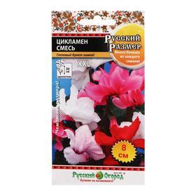 Семена цветов Цикламен, серия  Русский размер, смесь, 5 шт
