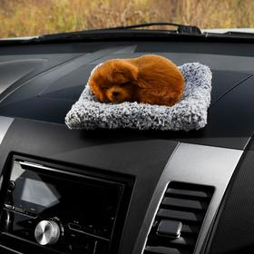 Toy on the car panel, dog on a pillow, red color