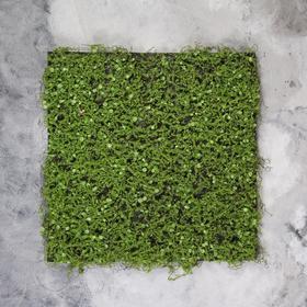 Декоративная панель, 50 × 50 см, «Мох с ряской»