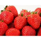 Strawberry seedling FRIGO Rumba A (9-15 mm), 5 PCs