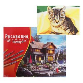 Картина по номерам 40×50 см в коробке «Котёнок под пледом»