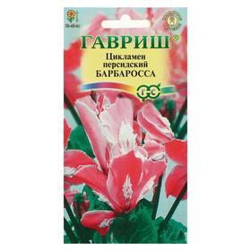"""Семена цветов Цикламен """"Барбаросса"""", персидский, 3 шт"""