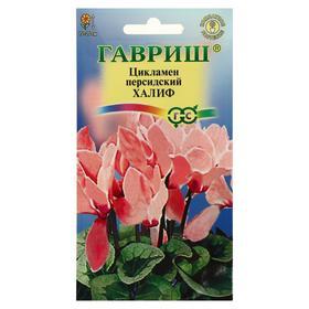 "Семена цветов Цикламен ""Халиф"", персидский, 3 шт"