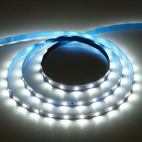 Светодиодная лента Ecola PRO, 12В, SMD3528, 5 м, IP20, 4.8Вт/м, 60 LED/м, 6000К