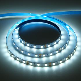 Светодиодная лента Ecola PRO, 12В, SMD5050, 5 м, IP20, 14.4Вт/м, 60 LED/м, 6000К