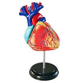 Развивающая игрушка «Анатомия человека. Сердце», 29 элемент