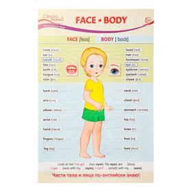 "Плакат ""Face. Body"" А3"