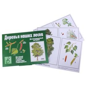 Обучающие карточки «Деревья наших лесов»