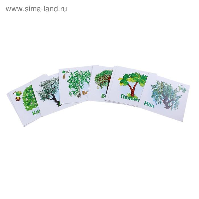 """Карточки развивающие """"Лесные деревья"""", 12 шт"""