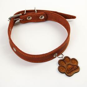 Ошейник кожаный однослойный, 30 - 50 см, 58 х 2.5 см, коньяк